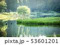 カキツバタ 53601201