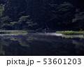 カキツバタ 53601203