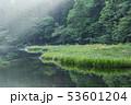 カキツバタ 53601204