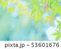 梅雨 53601676