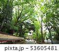 埼玉県 武蔵一宮氷川神社の参道 53605481