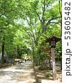 埼玉県 武蔵一宮氷川神社の参道 53605482