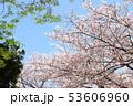 桜 満開 春の写真 53606960