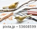 バードカービング。野鳥の木彫刻、野鳥彫刻。彩色済はウグイスです。※素人の製作途中の作品です。 53608599