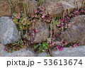 Plants growing among the stones of Ancient megalithic Nuraghe to 53613674