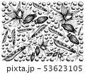 ボリジ 種 種子のイラスト 53623105
