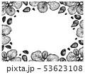 アーモンド ハタンキョウ 葉のイラスト 53623108