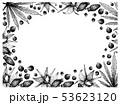 ボリジ 種 種子のイラスト 53623120