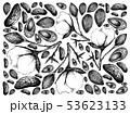 アーモンド ハタンキョウ 花のイラスト 53623133