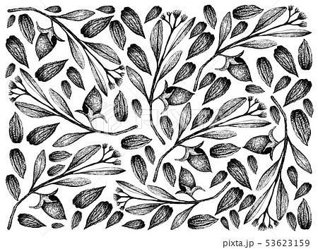 Hand Drawn of Jojoba Nuts and Seeds Background 53623159