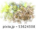 大木の根 水彩画風 53624508