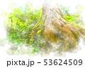 大木の根 水彩画風 53624509