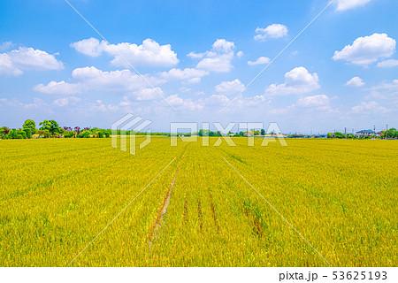 小麦畑と青空【埼玉県上里町】 53625193