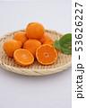 マンダリンオレンジ 53626227