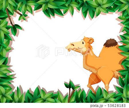Camel on nature border 53628183