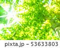 新緑・エコイメージ 53633803