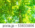 新緑・エコイメージ 53633806