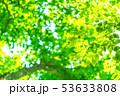 新緑・エコイメージ 53633808