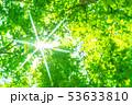 新緑・エコイメージ 53633810