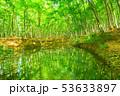 新緑・エコイメージ 53633897