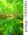 新緑・エコイメージ 53633901