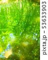 新緑・エコイメージ 53633903