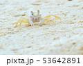 白砂ビーチのカニ 53642891