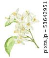 水彩画 花 果物のイラスト 53642951