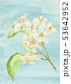 水彩画 花 果物のイラスト 53642952