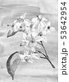 モノトーン 水彩画 花のイラスト 53642954