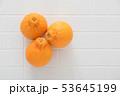 フルーツ 果実 果物の写真 53645199