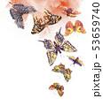蝶 水彩画 カラーのイラスト 53659740