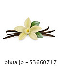 Vector 3d Realistic Composition with Sweet Scented Fresh Vanilla Flower with Dried Seed Pods and 53660717