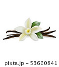 Vector 3d Realistic Composition with Sweet Scented Fresh Vanilla Flower with Dried Seed Pods and 53660841