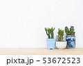 さぼてん サボテン 仙人掌の写真 53672523