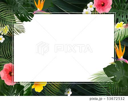 背景-夏-熱帯-トロピカル-モンステラ-プルメリア-ハイビスカス-フレーム 53672532