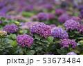 花 フラワー お花の写真 53673484