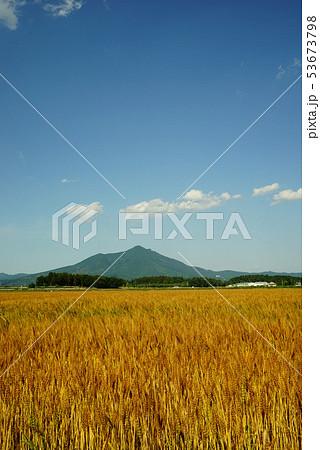 筑波山と麦畑 53673798