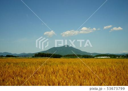 筑波山と麦畑 53673799