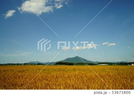 筑波山と麦畑 53673800