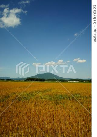 筑波山と麦畑 53673801
