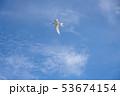 アジサシ・海鳥・飛ぶ・青空 53674154