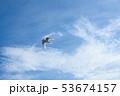 アジサシ・海鳥・飛ぶ・青空 53674157