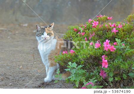 外猫(9歳) 53674190