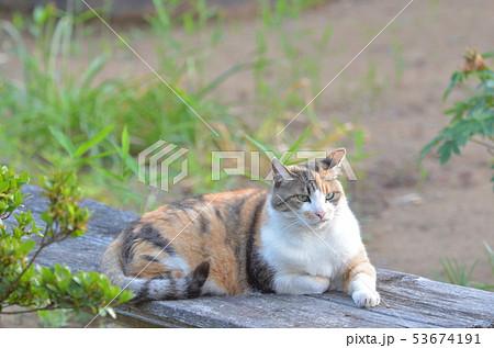 外猫(9歳) 53674191