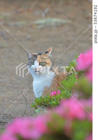 外猫(9歳) 53674192