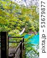 木 森 森林の写真 53679877
