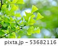 緑 葉っぱ 葉の写真 53682116