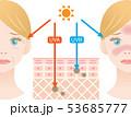 紫外線 肌の構造 女性 53685777