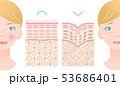 健康肌 しわ肌 肌の構造と白人女性 53686401